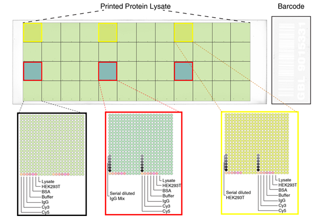 High Density Protein Microarray Specifications